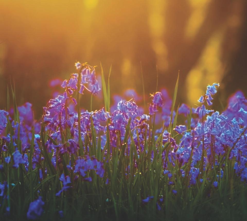 Wisdomflowers